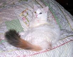 Mystic Tails Pixie Dust